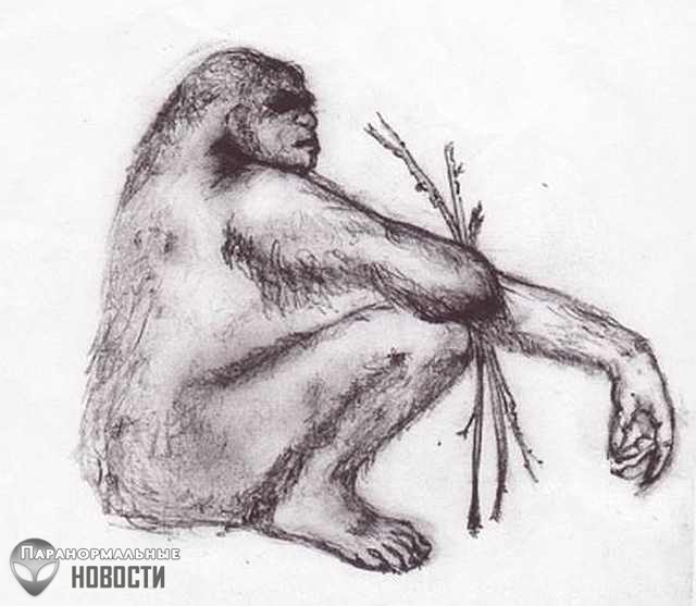 Австралиец стал криптозоологом когда увидел как загадочное существо вырвало с корнем дерево
