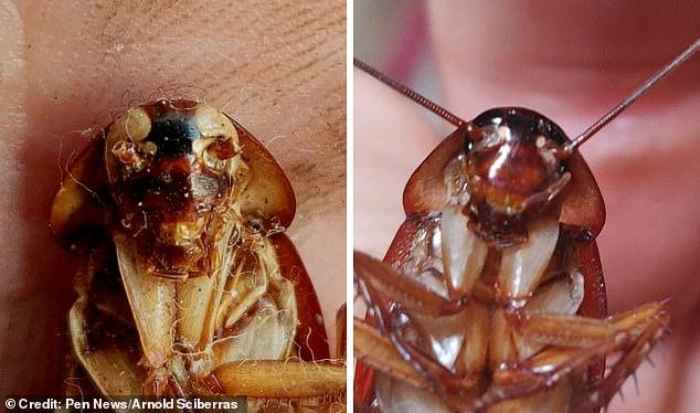 На Мальте обнаружили тараканов-мутантов с белыми глазами