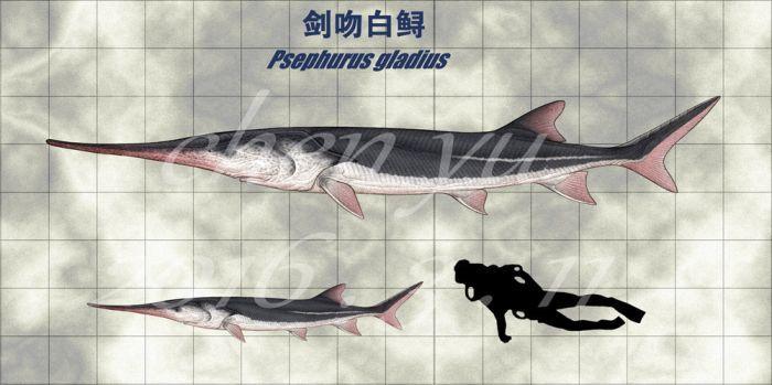 Крупнейшая в истории пресноводная рыба официально объявлена полностью вымершей