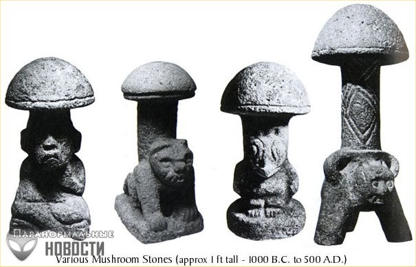 «Волшебные» грибы признаны безопасными для здоровья человека