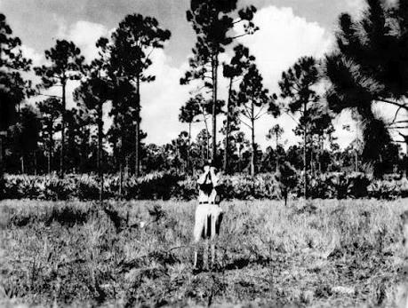 Странный случай с вонючим НЛО и бойскаутами в штате Флорида