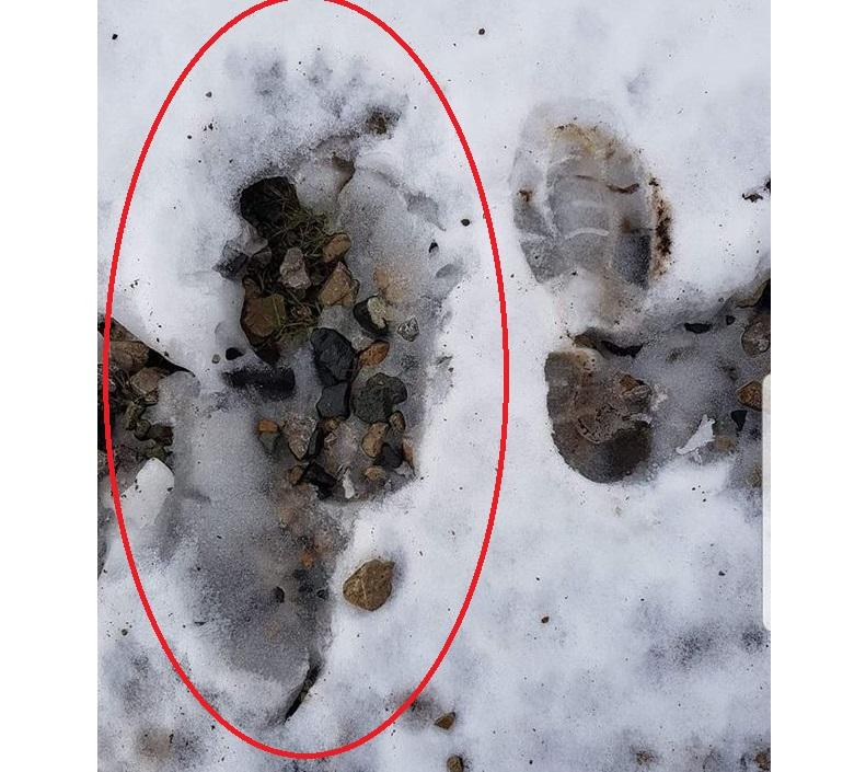 В Дублине нашли огромные следы непонятного существа