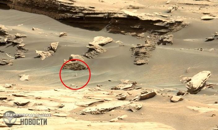 Гриб, червяк или цветок? На фото с Марса нашли новый странный объект