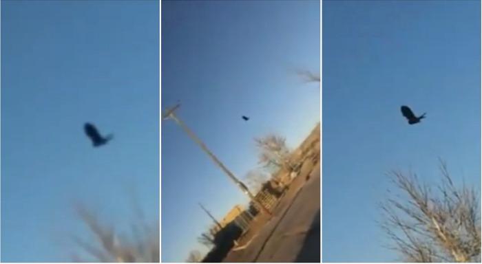 Глюк в Матрице с застывшей в воздухе вороной заснят в Нью-Мексико