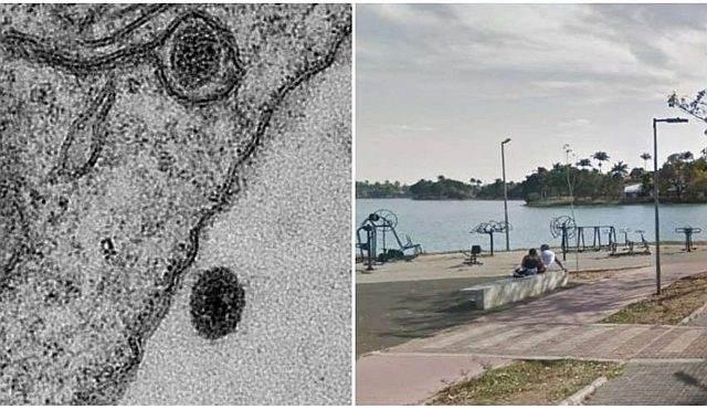 В бразильском озере обнаружен загадочный вирус, который не смогли опознать ученые