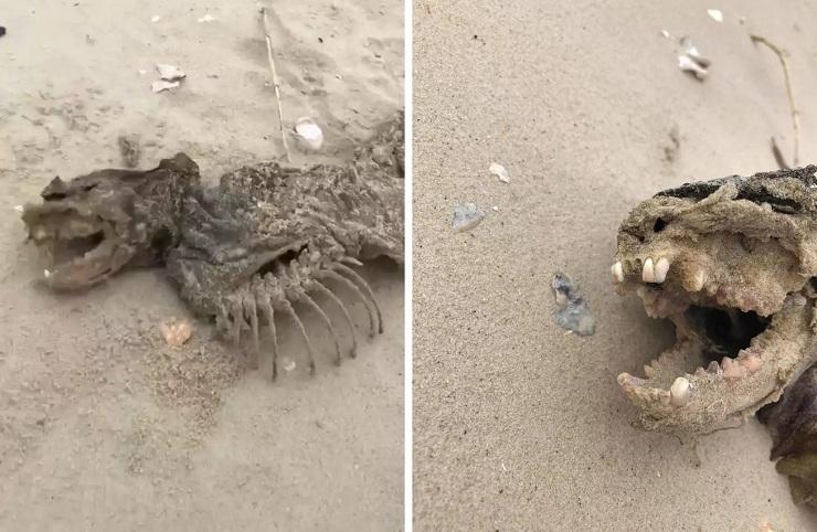 Останки непонятного животного нашли рядом с островом, на котором живут лабораторные обезьяны