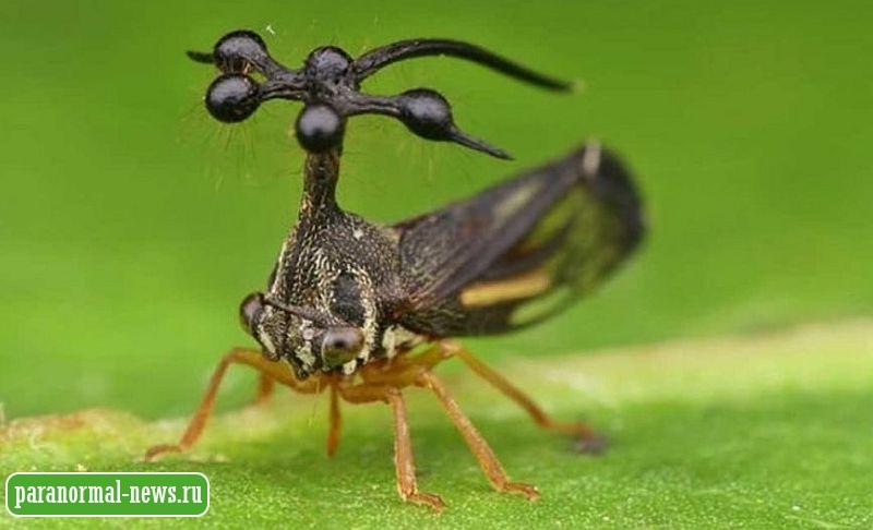 В Никарагуа открыли новое насекомое, которое выглядит как что-то внеземное