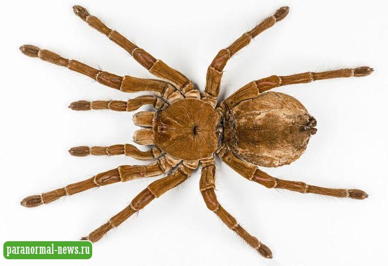 В некоторых странах люди видят загадочных огромных пауков