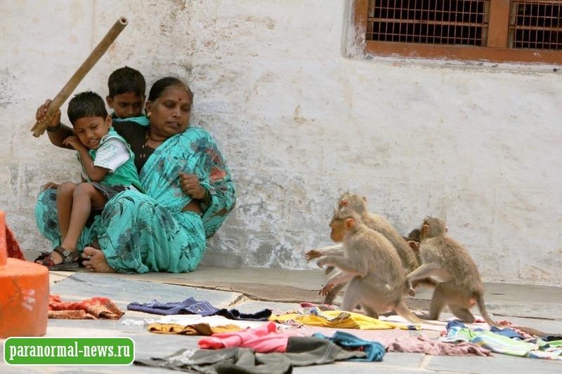 Жители пяти городов Индии сообщают о загадочном человеке-обезьяне