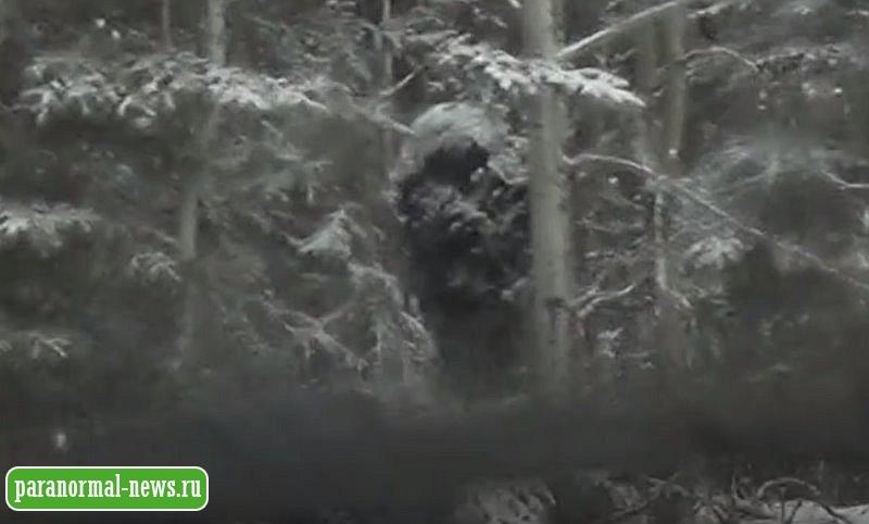 Камера авторегистратора засняла огромного бигфута среди заснеженных сосен