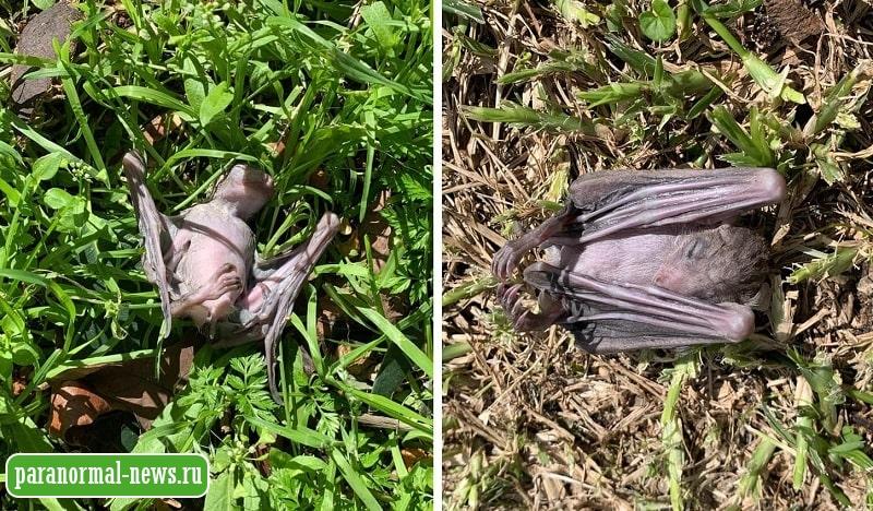 Жителей Израиля напугала странная смерть летучих мышей