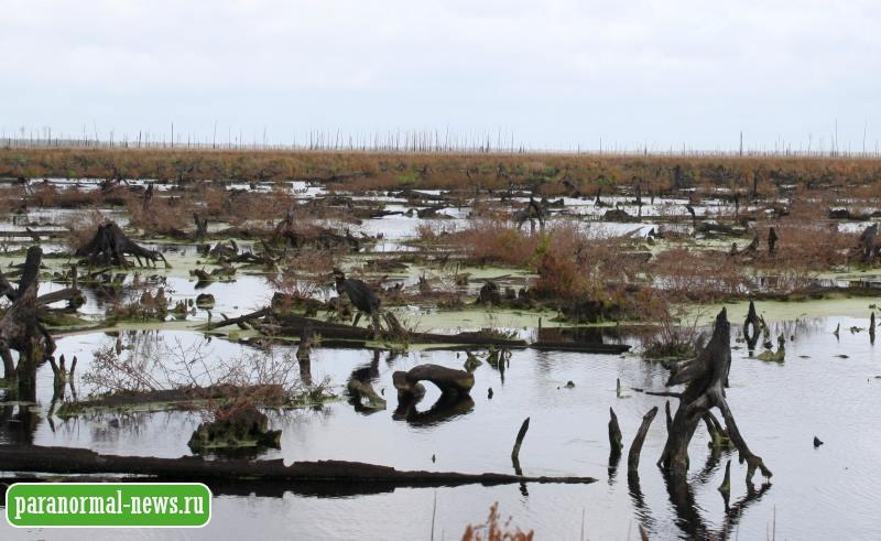 Монстр из болота Вирджинии массово убивал собак и коз