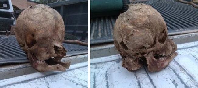 Странный череп найден на ранчо в Техасе