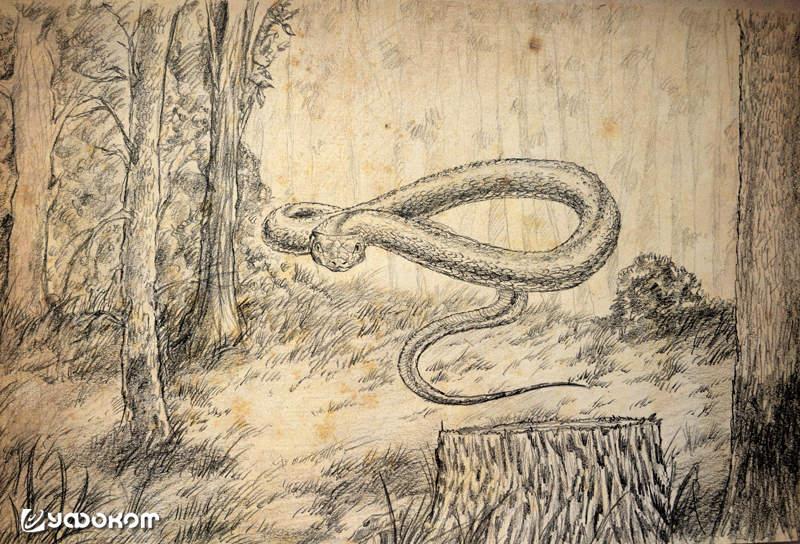 Жабий король и летающие змеи: Монстры белорусского Полесья
