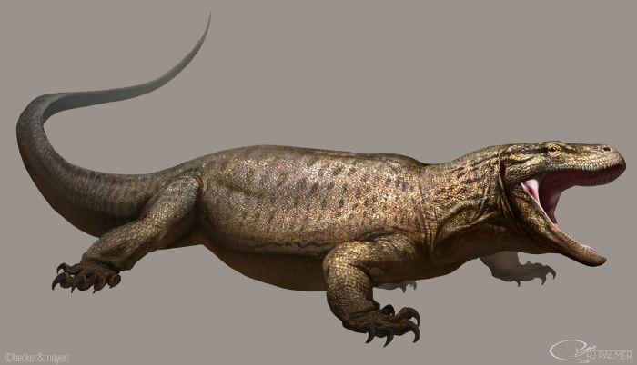 Гигантские ящерицы-людоеды живут в дебрях Австралии?
