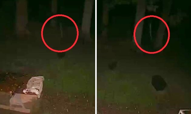 Странное существо-палочка Стикмен попало на камеру видеонаблюдения