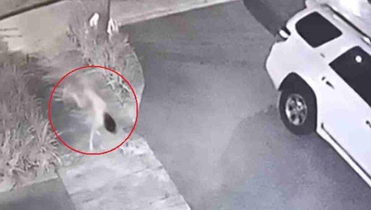 Жуткое видео с бегающей на четвереньках девушкой-скелетом вызвало шквал обсуждений в сети