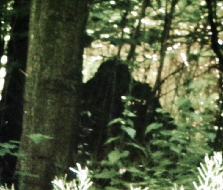 В Нью-Йорке женщина увидела прыгающую по деревьям огромную обезьяну ростом с человека