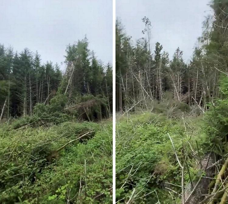 Мужчина обнаружил место посадки НЛО в лесу и услышал странные крики