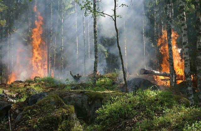 Пожарный, тушивший лес, столкнулся с агрессивным йети