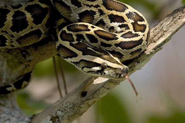 Шотландец увидел огромного угря или змею, живущую в маленьком пруду