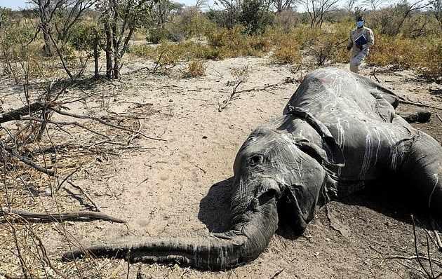 Загадочная смерть слонов в Ботсване была вызвана «новым патогеном»