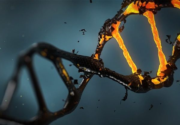 Могут ли промышленные загрязнения создавать животных-мутантов, которых мы зовем криптидами?