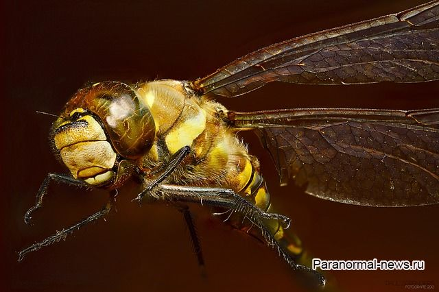 Почему люди иногда видят гигантских стрекоз? Это мутанты или пришельцы из древней Земли?