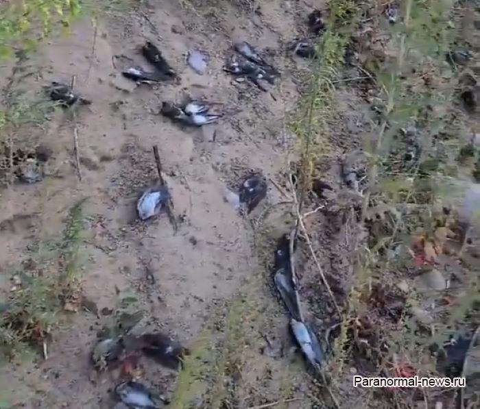 В Нью-Мексико миллионы птиц замертво упали с неба