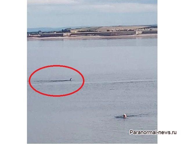 Несси сбежала из Лох-Несс? Странное существо засняли у берегов Шотландии