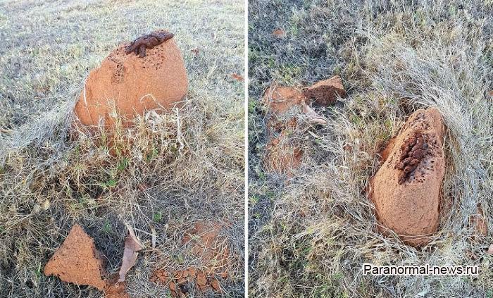 В Австралии нашли странные экскременты, возможно от йети