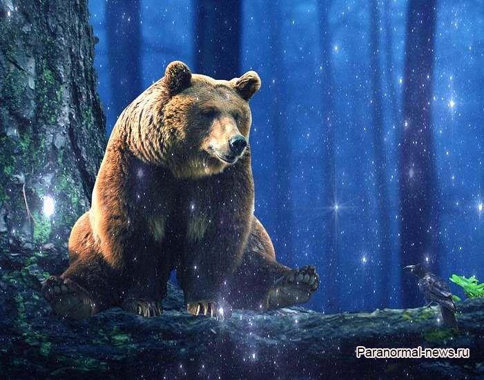 Призрачный медведь Клэпхэмского леса оставляет следы и убивает собак