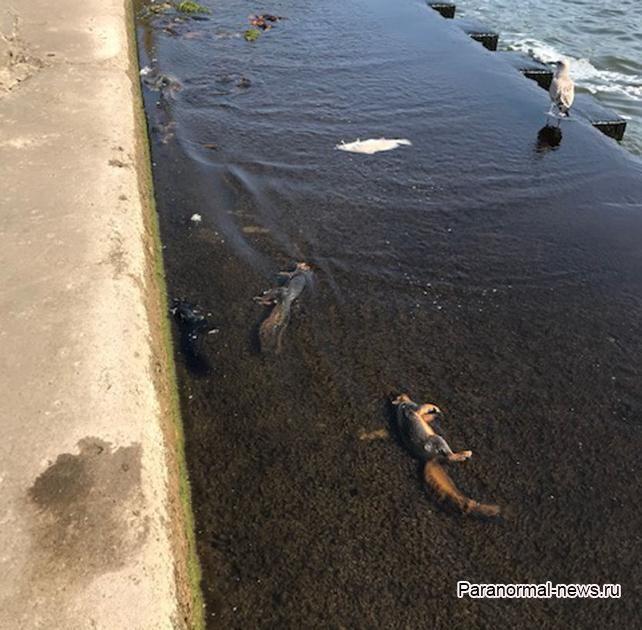 На пляж озера Мичиган выбросило 100 мертвых белок