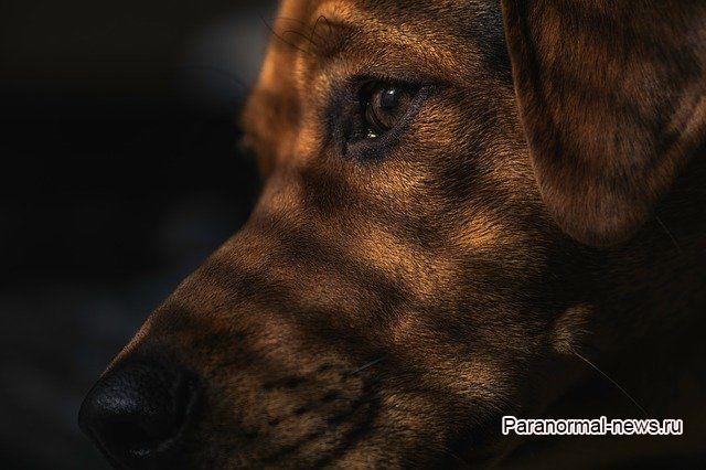 Пес в 3 часа ночи видит нечто в доме и другие аномальные случаи с собаками