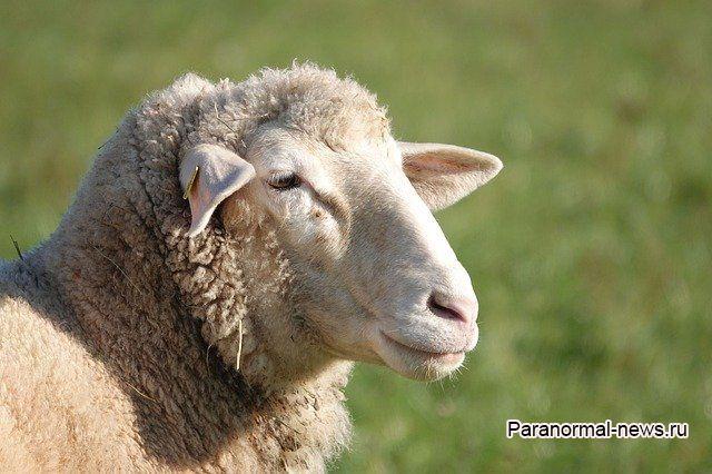 Как пастушка из Боливии встретила жестоких пришельцев, убивших стадо ее овец