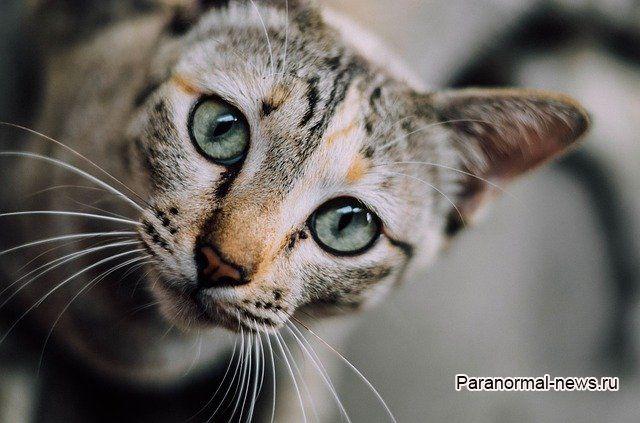 Новые аномальные истории, связанные с кошками