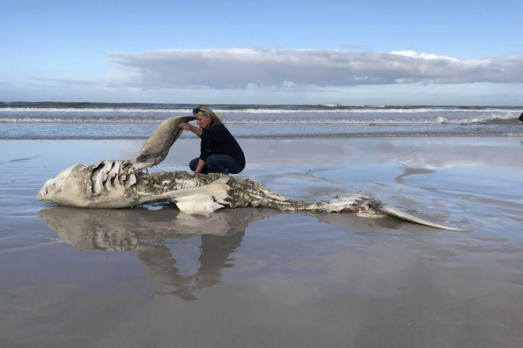 Из-за страсти к печени, косатки сожрали всех белых акул возле берегов ЮАР