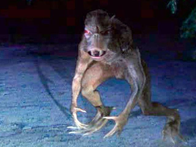 В Марий Эл чупакабра уничтожила кур и кроликов, оставив крошечные дырочки на шее