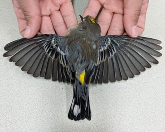 Эксперты выяснили, что массовый мор птиц в США произошел из-за голода