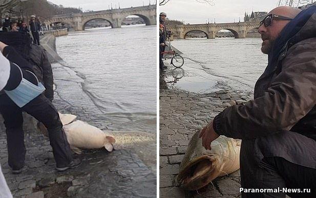 В центре Парижа из реки выловили сома, размером с человека
