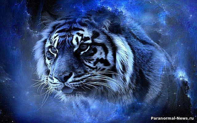 Таинственные голубые тигры: Мутация или что-то иное?