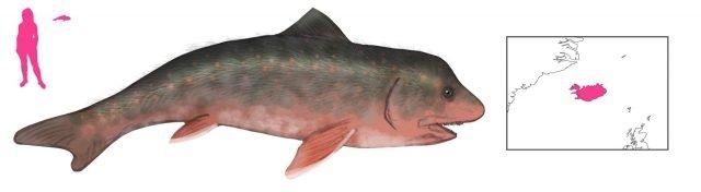 Древние исландцы не только видели разных морских монстров, но ловили их и даже пытались их есть