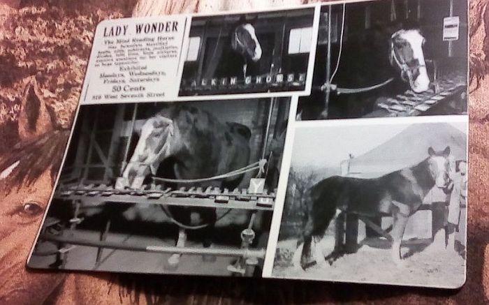 Причудливая история Леди - Великой лошади-экстрасенса