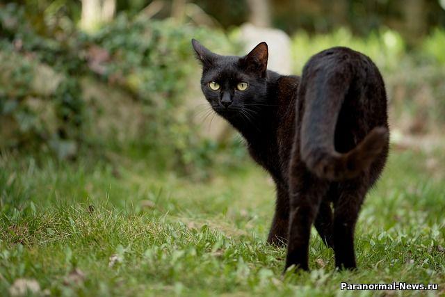 Легенда о призрачном коте - предвестнике несчастий, живущем в подземельях Капитолия США