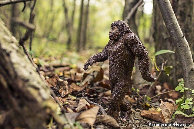 В Индиане турист встретил в лесу йети с детенышем