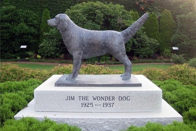 Супер-пес Джим, который понимал человеческую речь и читал мысли