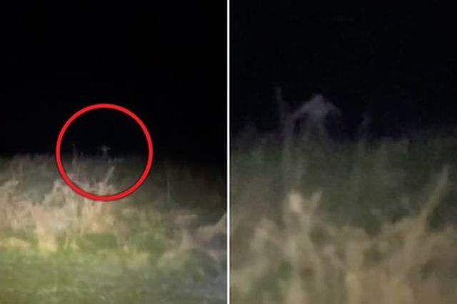 На видео засняли тощего монстра, выскакивающего из травы (+ видео)