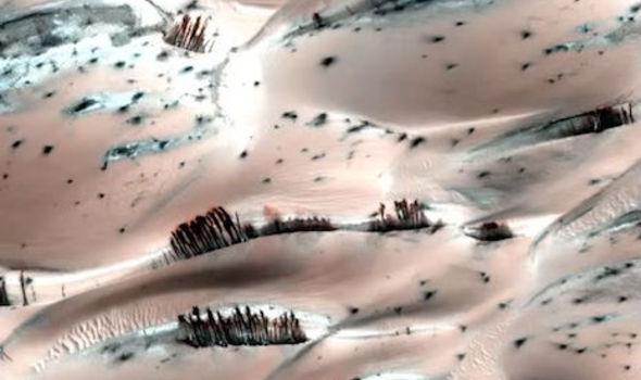 Загадка марсианских деревьев