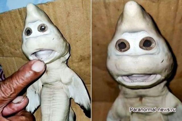Из-за редкой мутации акуленок стал похож на мультяшного призрака