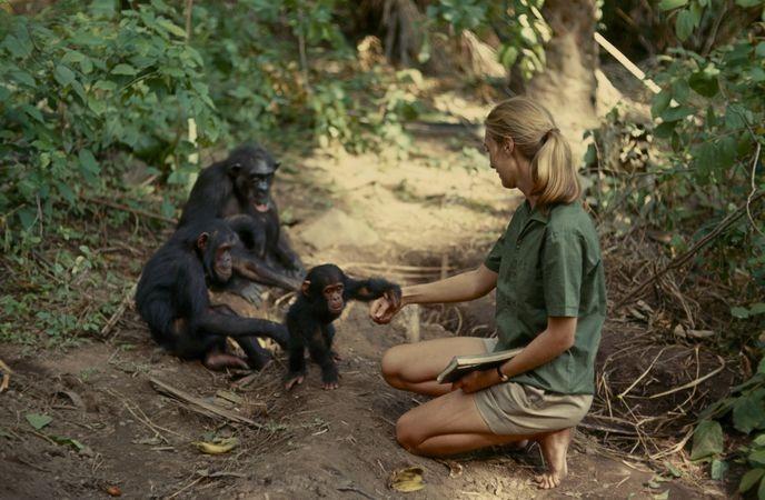 Жуткая история о Гражданской войне шимпанзе